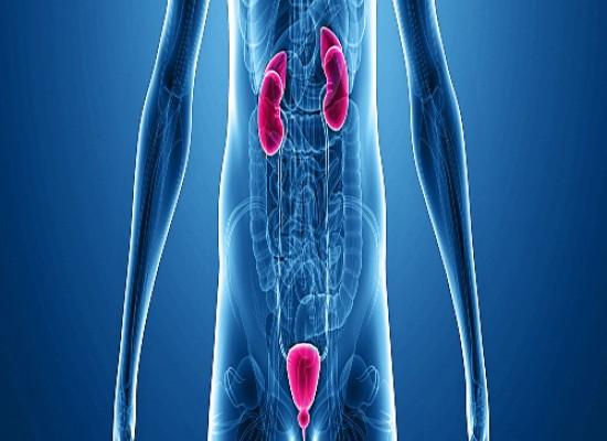 Urološki pregled sa ultrazvukom prostate, bešike, bubrega, testisa sa tumor markerima PSA i fPSA + besplatno ordiniranje terapije u Poliklinici Labomedica