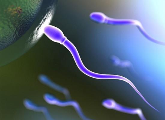 Analiza semene tečnosti! Spermokultura i spermogram za 1650rsd!